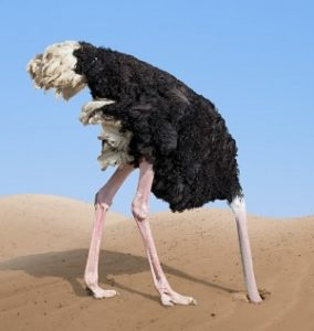 Ostrich sticks its head into the desert sands.
